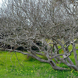 by Kishu Keshu - Nature Up Close Trees & Bushes