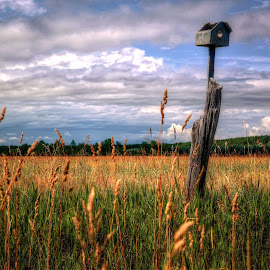 birdhouse by Fraya Replinger - Landscapes Prairies, Meadows & Fields ( field, clouds, grass, birdhouse, prairie )