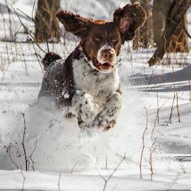 Turkey Alert by Kevin Zini - Animals - Dogs Running