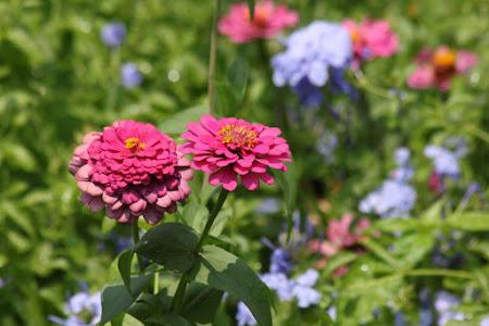 De Hofmaker - Tuinontwerp, tuinaanleg en tuinonderhoud foto