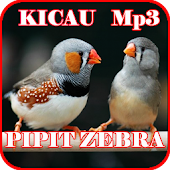 Kicau Pipit Zebra Finch Mp3 APK for Bluestacks