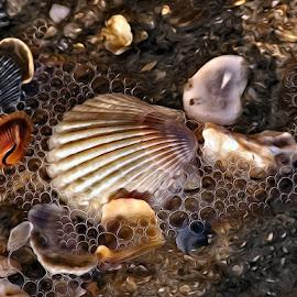 Seashells & Bubbles Painted by Anna Carneal - Digital Art Things ( water, sand, shells, hatteras, bubbles, ocean, seashells )