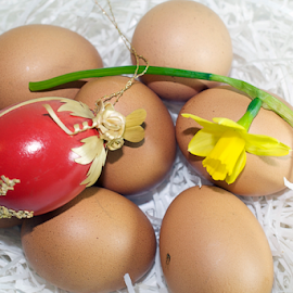 easter eggs with the spring flower by LADOCKi Elvira - Public Holidays Easter ( holiday, eggs, easter, colorful, color, easter decorations, easter eggs, decorations, glowing )