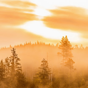 Canada Geese During Sunrise by Sami Rahkonen - Animals Birds ( wildlife, landscape, birds, sun, sky, nature, tree, sunbeam, clouds, water, wild animal, wild, colors, beautiful, forest, sunlight, early morning, bird, wilderness, color, fog, summer, trees, sunrise, canada geese, geese )