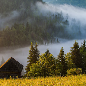 sunrise fog by Sorin Tanase - Landscapes Prairies, Meadows & Fields ( fog, forest, sunrise, landscape )