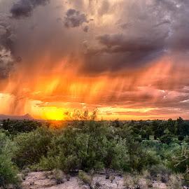 Rain by Charlie Alolkoy - Landscapes Weather ( desert, arizona, tucson, weather, rain )
