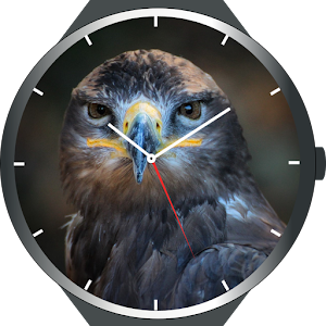 Download Birds Watch Faces For PC Windows and Mac
