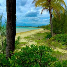 Banana Bay, Grand Bahama Island.April 30, 2015 by Susan Byrd - Landscapes Beaches