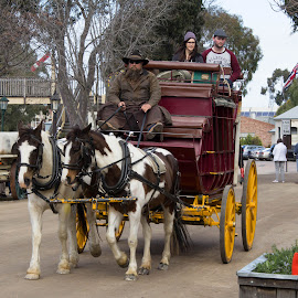 Horse drawn stage coach by Trevor Smart - Transportation Other ( australia, echuca, victoria, tourism, stage coach, pinto horses )