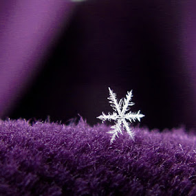 Snowflake Royale by Tina Dare - Nature Up Close Other Natural Objects ( macro, purple, snowflake, close up )