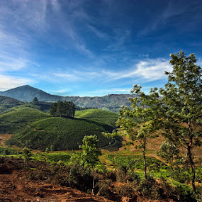 Munnar Beauty by Arnab Sarkar - Landscapes Mountains & Hills ( canon, mountain, sigma, wave, tata, kerala, india, tea, munnar )