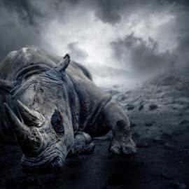 The Last by Anthony Wood - Digital Art Animals ( desert, extinction, rhino )