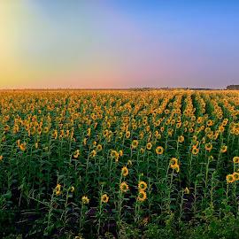 by Constantinescu Adrian Radu - Landscapes Prairies, Meadows & Fields