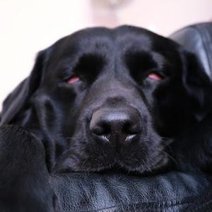 Alfie sleep.jpeg
