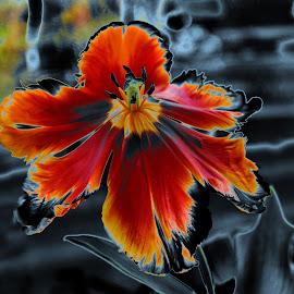Predator by Claudiu Petrisor - Digital Art Things ( abstract, croma, infrared, tulip, aberation,  )