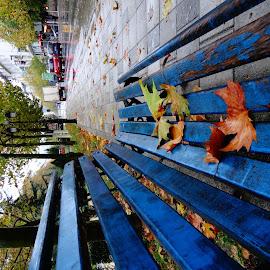 fall by Dritan Zaimi - City,  Street & Park  Street Scenes