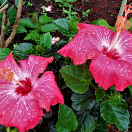 by Denise O'Hern - Flowers Flower Gardens (  )