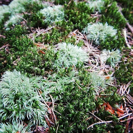 Light & Dark Moss by Diane Butler - Instagram & Mobile Instagram ( moss, puremichigan, nature )