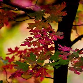 Fall by Muzo Gul - Nature Up Close Leaves & Grasses ( pwcfallleaves, fallen, fall, leaf, leaves )