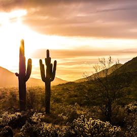 by Ken Mickel - Landscapes Deserts ( clouds, desert, plants, buckhorn cholla, landscape, buckeye, photography, nature, landscape/desert, cacti, sunset, sunsets, arizona, outdoors, cloudy, skyline regional park, cholla, saguaro, cactus )