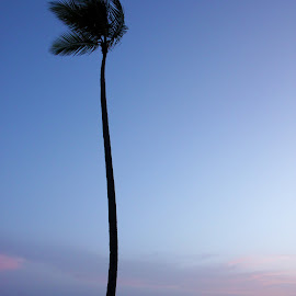 Dominican Republic by Emma Thompson - Landscapes Beaches ( palm tree, silhouette, sunset, paradise, caribbean )