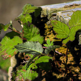 by Tammy Cassford - Nature Up Close Leaves & Grasses