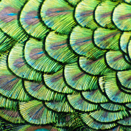 Abstract layers by Heather Clark - Abstract Patterns ( abstract, green, feathers, peacock )
