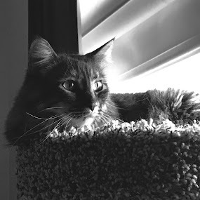 by Zach Givens - Animals - Cats Portraits (  )