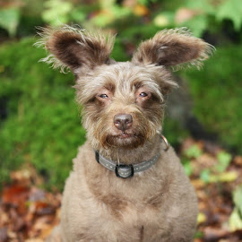 funny ears by Carola Mellentin - Animals - Dogs Portraits