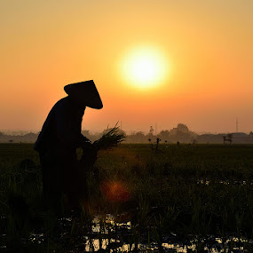 farmed in misty morning by Gunarsa Gunarsa - Landscapes Sunsets & Sunrises ( farmer, aep gunarsa, misty sunrise, morning )