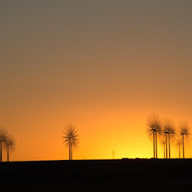The Sunset! by Craig Turner - Buildings & Architecture Other Exteriors ( alt energy, northern colorado, sunset, colorado, windmill )