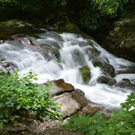 Smoky Mountain Water Falls by Thomas Shaw - Landscapes Waterscapes ( water, waterfalls, mountain, green, waterfall, white, water falls, forest, gray, shrubs, mountains, trees, brown, water fall, rocks, smoky mountains )
