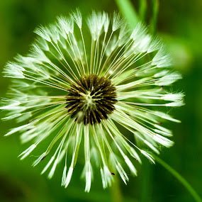 On the wind by Iztok Urh - Nature Up Close Other plants