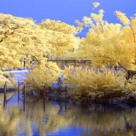 Tenderly by Yohanes Arief Dewanto - City,  Street & Park  City Parks ( ir, false color, ecopark, infrared, parks,  )