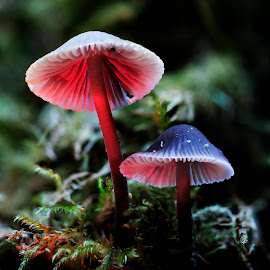 by Duncan McNaught - Nature Up Close Other plants