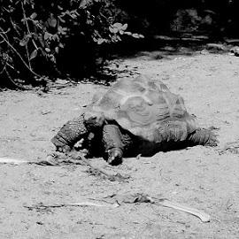 by Jon Crow - Animals Reptiles