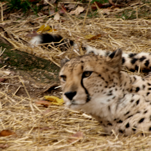 November 27,2015 Zoo E30 24620151127_140717246.jpg