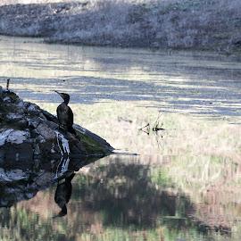 Water Reflection by Nazneen (voiceofcamera.com) - Nature Up Close Rock & Stone ( nazneen.org, voiceofcamera, water bird reflection, voiceofcamera.com, water bird )