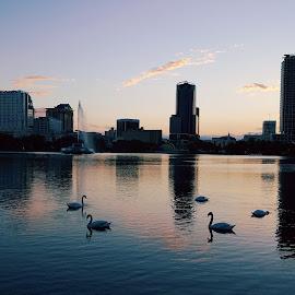 Swan Lake City by Tameem Sanjar - Buildings & Architecture Office Buildings & Hotels ( skyline, buildings, swan, lake, city )