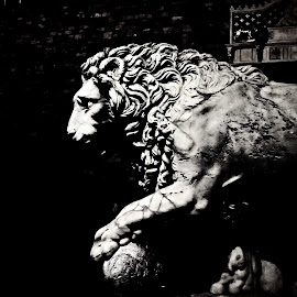 Guardian by Cosmin Tomescu - Buildings & Architecture Statues & Monuments ( lion, florence, bw, firenze,  )