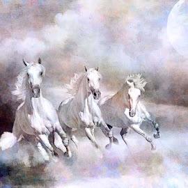 I Saw Three White Horses by David Baker - Digital Art Animals ( montage, art, digital, composite )