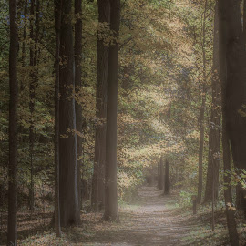 path by Tim Hauser - Landscapes Forests ( hiking path, tim hauser photography, fine art photography, path, nature photography )