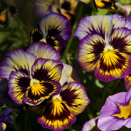 by Jolene Schack Dommer - Flowers Flower Gardens