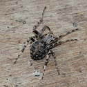 Bridge Spider