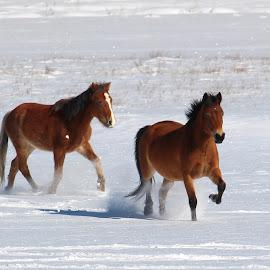 by РАЙНА СИНДЖИРЛИЕВА - Animals Horses