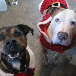 Begging for Christmas treats by Anne Nan - Public Holidays Christmas (  )