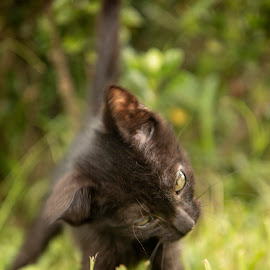 by Brook Kornegay - Animals - Cats Playing