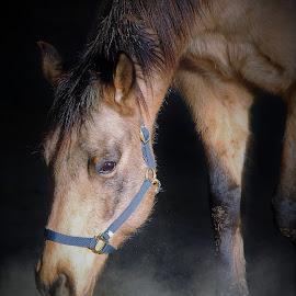 by Linda Tatler - Animals Horses