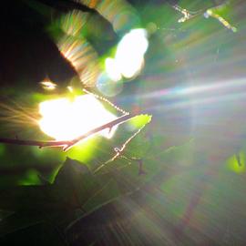 Sunburst Thru the Leaves - Macro by Tina Dare - Abstract Macro ( macro, close up, sunrays, green, sunburst, nature, up close, pattern, nature up close, abstract, sun )