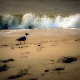 by Barbara Busch - Uncategorized All Uncategorized ( water, bird, white caps, sand storolin, waves, ocean, shadows )